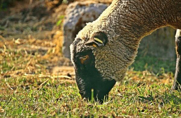 Calcetines de lana merina