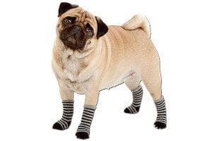 Calcetines para perros y gatos